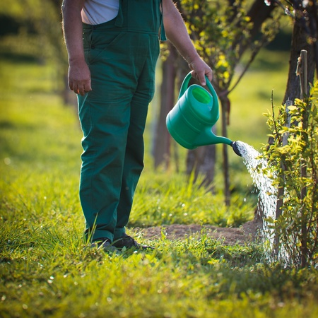 watering orchard/garden - portrait of a senior man gardening in his garden (color toned image) Stock Photo - 11303553