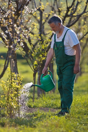 spades: watering orchardgarden - portrait of a senior man gardening in his garden (color toned image) Stock Photo