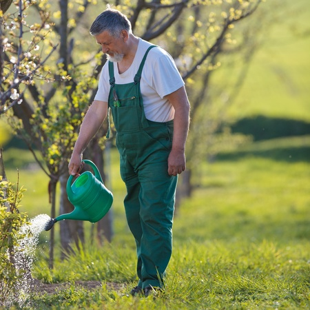 senior home: watering orchardgarden - portrait of a senior man gardening in his garden (color toned image) Stock Photo