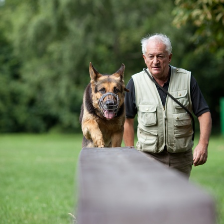 shepherd's companion: Master and his obedient (German shepherd) dog at a dog training center