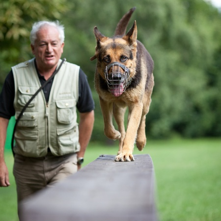 Master and his obedient (German shepherd) dog at a dog training center photo