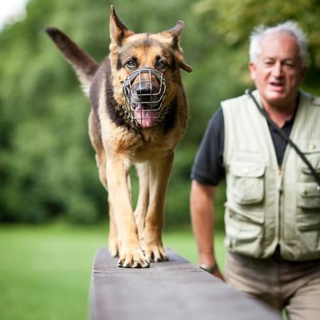 Maître et son obéissance (berger allemand) chien dans un centre de formation de chien