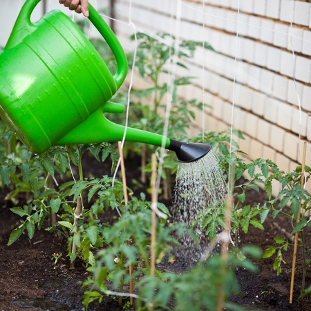 ittle: ittle organicbiopermaculture garden