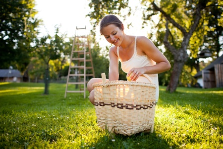 Young woman collecting apples in an orchard on a lovely sunny summer day photo