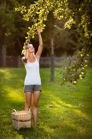 Mujer joven en una escalera recogiendo manzanas de un árbol de manzana en un día soleado de verano preciosa