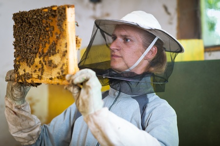 apiarist: Beekeeper in an apiary holding a frame of honeycomb covered with swarming bees Stock Photo