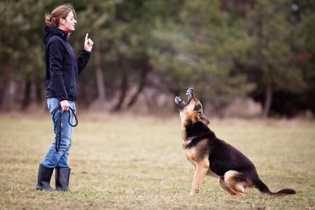 obediencia: Maestro y su perro obediente (pastor alemán)