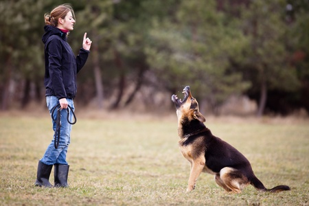 Master and her obedient (German shepherd) dog photo