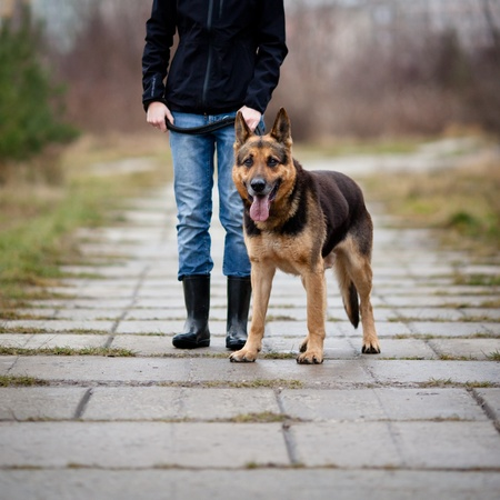 Master and her obedient (German shepherd) dog Stock Photo - 12405560