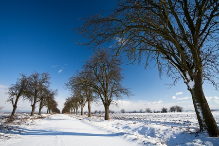 Lovely winter landcape - alley covered with fresh snow on a sunny winter day Stock Photo - 12406367