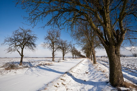 Lovely winter landcape - alley covered with fresh snow on a sunny winter day Stock Photo - 12406393
