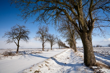 Lovely winter landcape - alley covered with fresh snow on a sunny winter day Stock Photo - 12406412