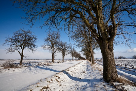 Lovely winter landcape - alley covered with fresh snow on a sunny winter day photo