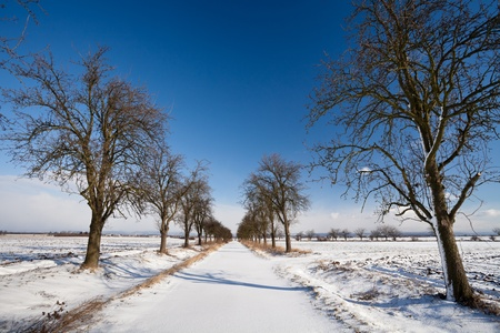 Lovely winter landcape - alley covered with fresh snow on a sunny winter day Stock Photo - 12406371
