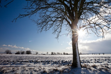 strong wind: Lovely winter landcape on a sunny winter day Stock Photo