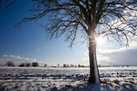 Lovely winter landcape on a sunny winter day Stock Photo - 12655152