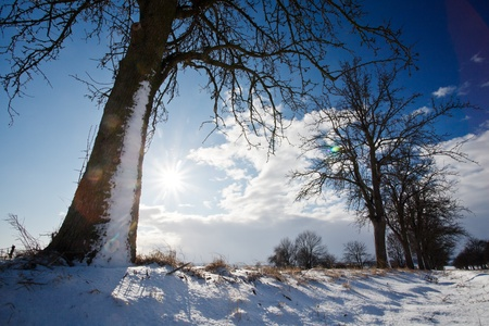 Lovely winter landcape on a sunny winter day photo