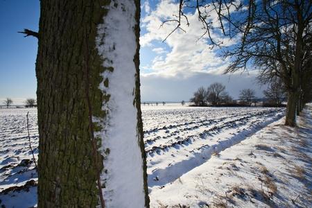 Lovely winter landcape on a sunny winter day Stock Photo - 12655106
