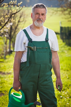 dibble: portrait of a senior gardener in his gardenorchard (color toned image)