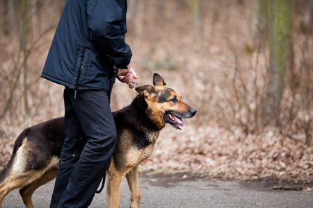 alsation: Master and his obedient (German Shepherd) dog