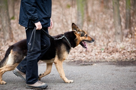 obediência: Master and his obedient (German Shepherd) dog
