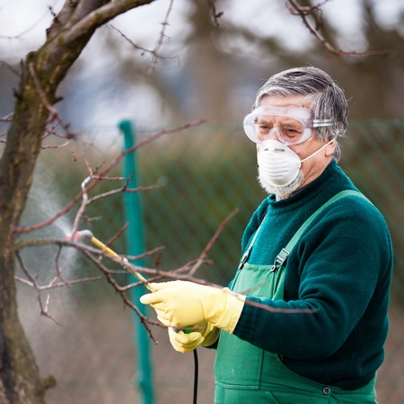 Using chemicals in the gardenorchard: gardener applying an insecticidea fertilizer to his fruit shrubs, using a sprayer photo