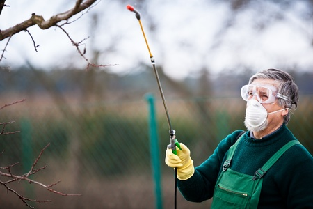 Using chemicals in the garden orchard  gardener applying an insecticide a fertilizer to his fruit shrubs, using a sprayer Stock Photo - 13153816