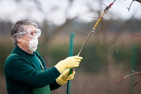 Using chemicals in the garden/orchard: gardener applying an insecticide/a fertilizer to his fruit shrubs, using a sprayer Stock Photo - 12987857