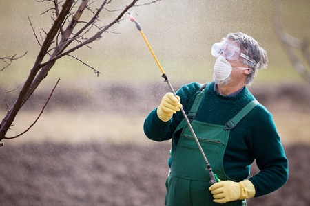 fertilizer: Using chemicals in the garden orchard  gardener applying an insecticide a fertilizer to his fruit shrubs, using a sprayer