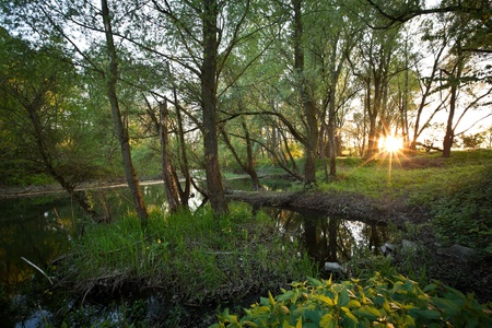 biotope: Beautiful riparian forest scenery on a lovely summer evening  Stock Photo