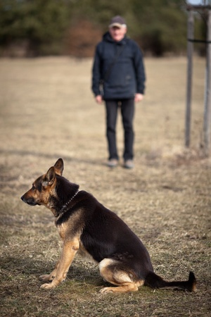 german shepherd on the grass: Master and his obedient (German Shepherd) dog