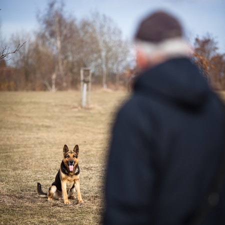 Master and his obedient  German Shepherd  dog Stock Photo