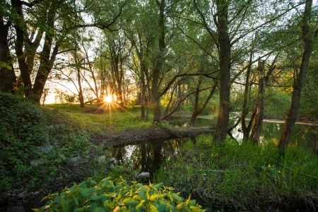 biotope: Beautiful riparian forest scenery on a lovely summer evening