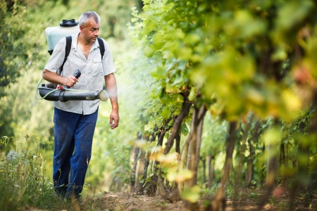 Vintner walking in his vineyard spraying chemicals on his vines Stock Photo - 14353882