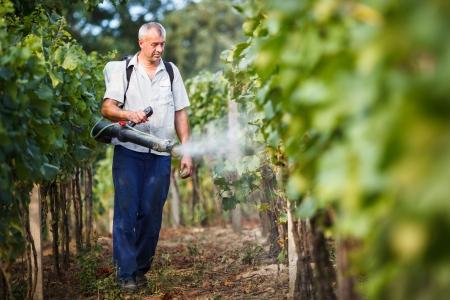 Vintner walking in his vineyard spraying chemicals on his vines photo