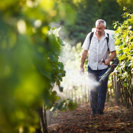 farm worker: Vintner walking in his vineyard spraying chemicals on his vines
