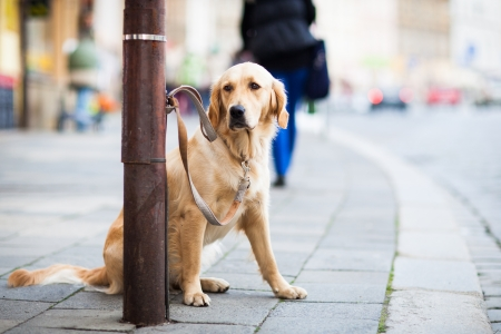 Cute dog waiting patiently for his master on a city street photo
