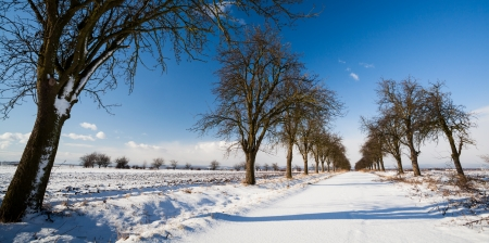 Lovely winter landcape - alley covered with fresh snow on a sunny winter day Stock Photo - 16818756