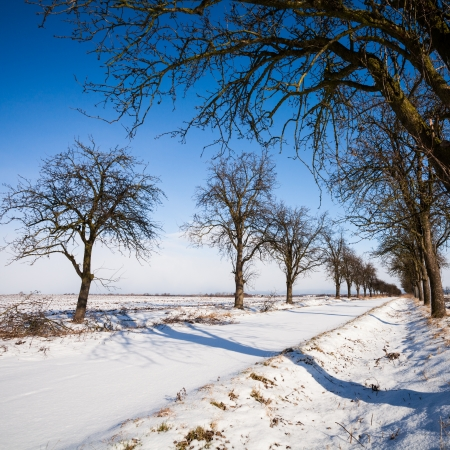 Lovely winter landcape - alley covered with fresh snow on a sunny winter day Stock Photo - 16818763