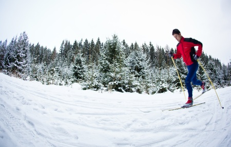 crosscountry: young man cross-country skiing on a snowy forest trail  motion blurred   color toned image