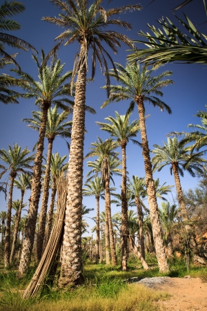 Oasis in the middle of a desert  Oman  Stock Photo - 17256195