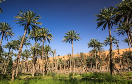 Wadi: Oasis in the middle of a desert  Oman