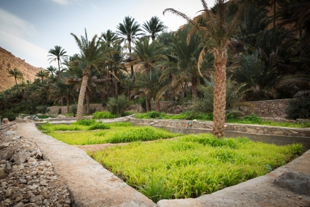 Oasis in the middle of a desert  Oman Stock Photo - 17256210