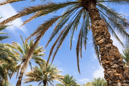 lybia: Oasis in the middle of a desert  Oman