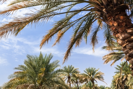 high desert: Oasis in the middle of a desert  Oman