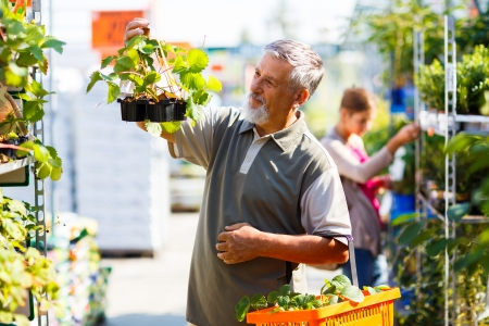 strawberry plant: Senior man buying strawberry plants in a gardening centre