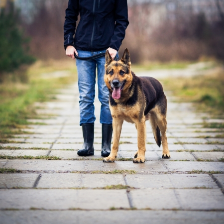german girl: Master and her obedient (German shepherd) dog
