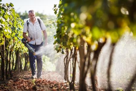 Vintner Fuß in seinem Weinberg Versprühen von Chemikalien auf seine Reben Lizenzfreie Bilder