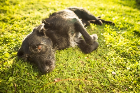 Cute dog lying in the grass in lovely late afternoon sunshine show with shallow DOF photo