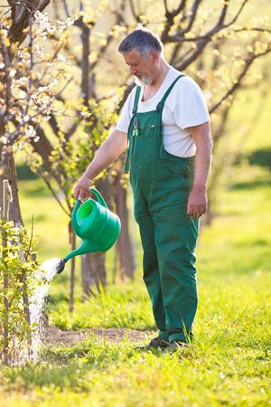 dibble: portrait of a senior gardener in his gardenorchard  Stock Photo